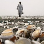 Pakistani man Abdul Raheem collects shells on Karachi's Clifton Beach