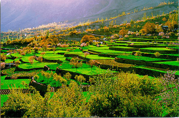 Image result for A Trip to Hunza fruit tree